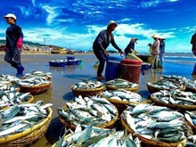 越南与欧盟结束越欧自贸协定法律审查程序