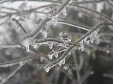 谅山省母山温度零降至2摄氏度 出现冰冻天气(组图)
