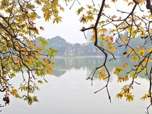 河内市换叶季节(组图)