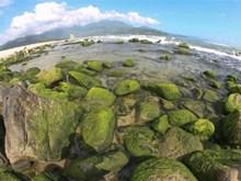 越南旅游:南乌海边礁石上的苔藓季节(组图)