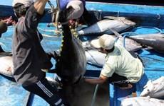 越南大力推进金枪鱼产业链发展