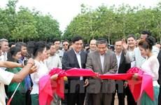 越南新边磅同公司在柬埔寨启动2015年首批采胶活动