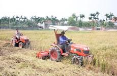 越南农业部门保障粮食安全改变农村面貌