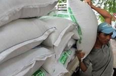 今年前8个月柬埔寨大米出口量达逾34.21万吨