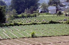 越南大力实现农业结构重组