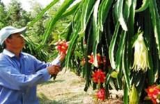 融入全球经济的背景下为农业破解难题(一):农民自我更新