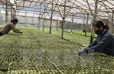 加入TPP—机遇与挑战:农业和TPP考验