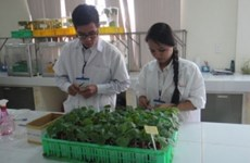融入全球经济的背景下为农业破解难题(二):探寻增强越南农产品竞争力之道