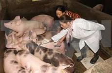 越南大力推进口蹄疫疫苗研发工作