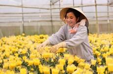 胡志明市与荷兰加强农业领域的合作