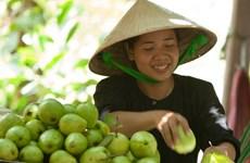 越南九龙江三角洲的10种水果已销往国外