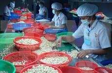 2015年前10个月越南腰果出口额增长18%以上