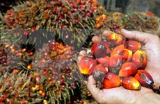 马来西亚和印尼同意成立棕油生产国委员会