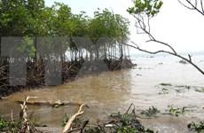 越南与国际社会携手应对气候变化