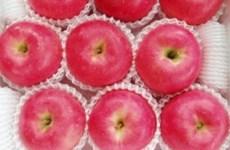 日本产苹果正式进军越南市场