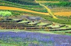 四季花开的木州高原