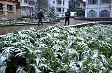 降温降雪严寒恶劣天气给北部各省造成严重损失