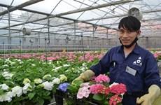 林同省大叻市高技术农业旅游的难忘印象