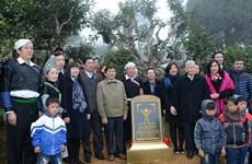 越南安沛省400棵古老山雪茶树被列入越南遗产树名单