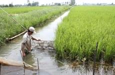 越南九龙江三角洲努力寻找措施应对气候变化
