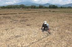 越南多地遭受严重旱灾和海水侵蚀袭击