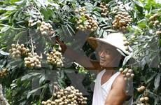 越南蔬果成功进军世界许多苛刻市场