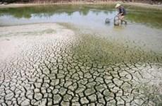 越南努力应对严重干旱