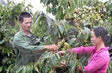 今年前两个月同奈省咖啡出口量达5.4万吨