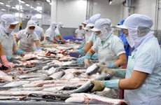 美国从4月15日起正式对越南查渔和巴沙渔进行检查