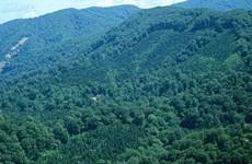 越南设立森林资源和林业用地监督信息系统