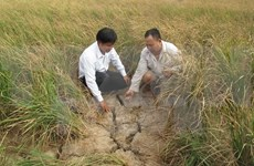 越南九龙江三角洲13个省市全都出现海水入侵现象