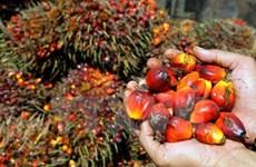 马来西亚棕榈油价格或将再上涨