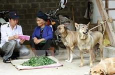 东盟动物卫生与人畜共患病协调中心成立在即