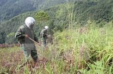国际排雷行动日:河静省着力做好战后排雷工作