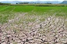 清化省积极采取措施应对海水入侵现象