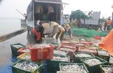 越南中部沿海四省大批鱼死亡事件:需要向渔民提供紧急援助