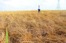 以色列为越南应对气候变化提供援助