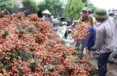 越南对中国的荔枝出口额达4200万美元