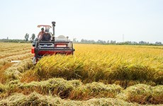 永隆省制定农业与农村领域招商引资项目43个