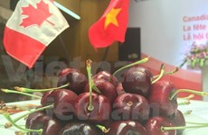 加拿大大力促进樱桃对越南出口力度