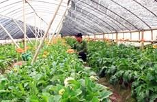 河内市加大科技应用促进农业生产发展
