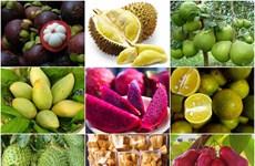 南部特产与安全食品农产辨别宣传周将于8月中旬在河内市举行
