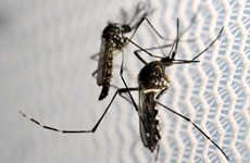 越南卫生部:密切监控寨卡病毒疫情 早日发现感染病例
