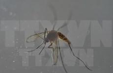 菲律宾发现第6例寨卡病毒感染病例