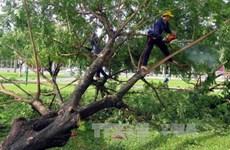 """越南各地尽快进行四号台风灾后修复重建工作并主动应对超强台风""""莫兰蒂"""""""