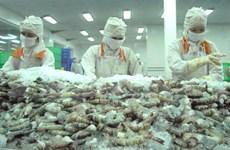 越南鲜活虾对澳大利亚出口前进广阔