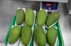 越南首批新鲜芒果亮相澳大利亚市场