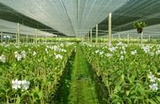 富安省投资5200亿越盾兴建高科技农业区基础设施