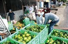 后江省凤协县农民携手将川橙品牌推向市场