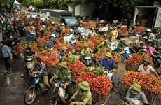 越南荔枝远销30多个国家和地区(组图)